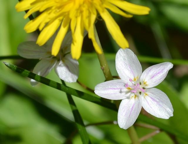 little white flower 2