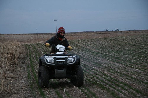 pre-dawn seeding