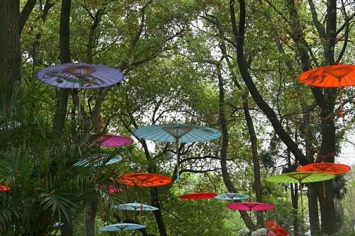 Tiger Hill umbrellas