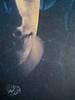 Marco Mancassola, Non saremo confusi per sempre, Einaudi 2011; Progetto grafico di Bianco, alla cop.: foto Stephen Carrol / Trevillon images; cop. (part.), 4