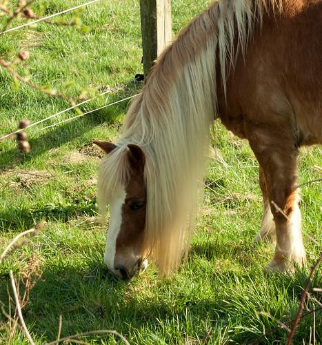 Pony mit Pony