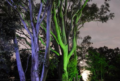 Bluesfest Trees
