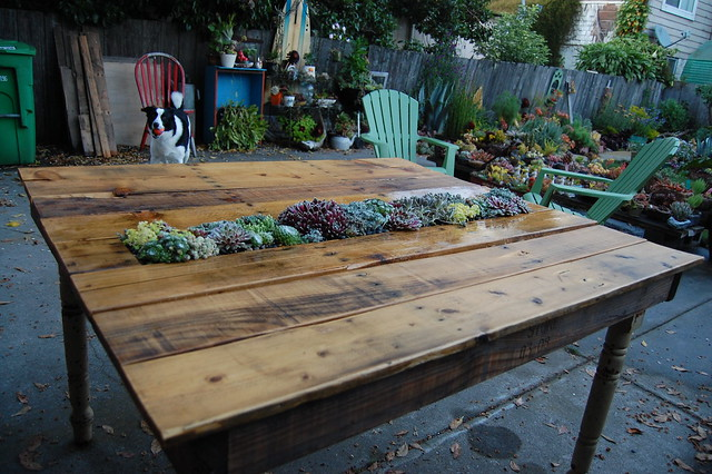 max with the new succulent table - Garden Furniture Using Pallets