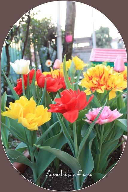 Primavera 2011