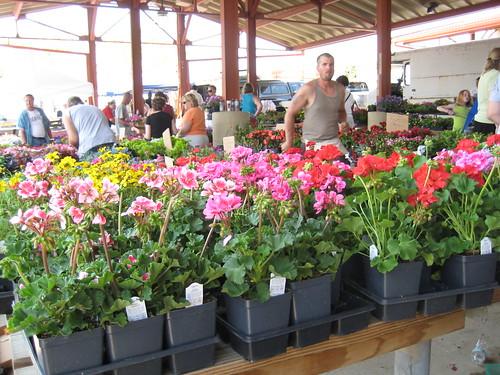 flowers at WA farmer's market