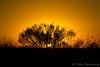 Louisiana Sunset by Possumburg