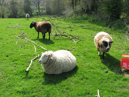woolly allsorts