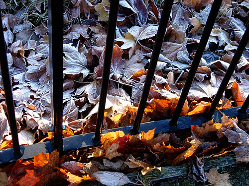 Leaves-and-fence