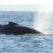 63 whale