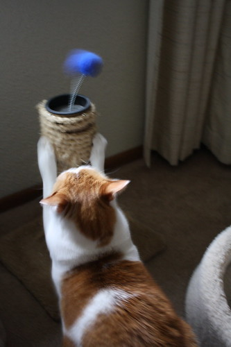 cat with scratching toy