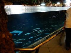 台灣水庫的魚