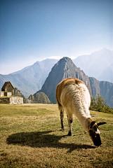 Inhabitant of Machu Picchu