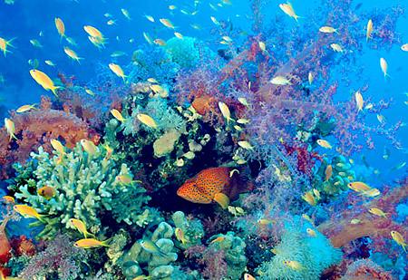 biodiversity2