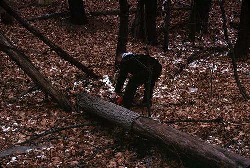 Clearing the logs, December 26, 2010 - my final Kodachrome shots