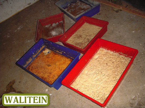 walitein-food-for-swiflets-04