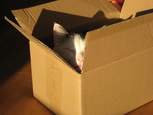 Juno sunbathing in a cardboard box (2009)