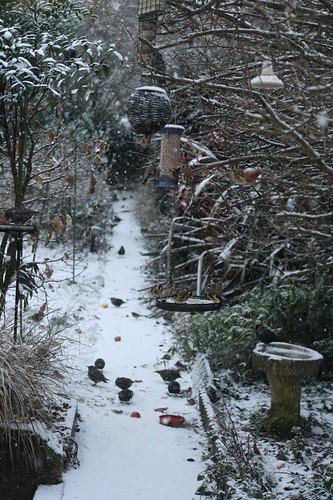 Snow and garden birds 17/12/10