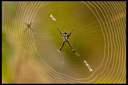 Signature Spider by Sushil