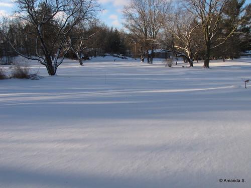 347/365 Fresh Snow