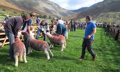 "Wasdale Shepherds Meet 8/10/16 • <a style=""font-size:0.8em;"" href=""http://www.flickr.com/photos/76977745@N03/29918814680/"" target=""_blank"">View on Flickr</a>"