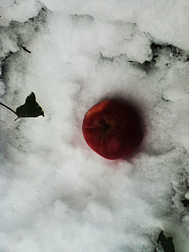 we eat apples in the snow