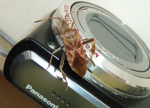 bug on a camera