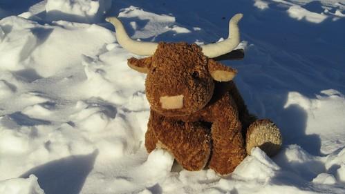 bevo-snow