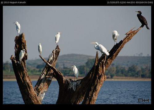 Black beauty, White suitors | Kabini