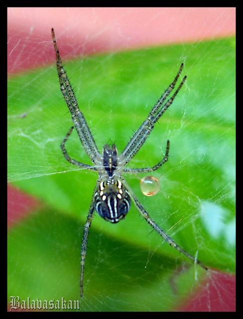 Spider -2