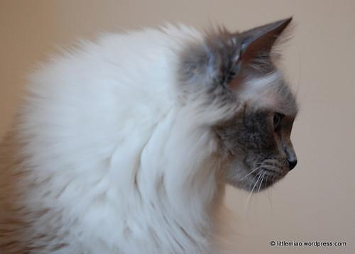 Lotus profile, Feb 2011