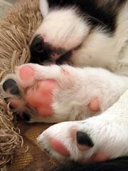 1525 Okemo puppy feet