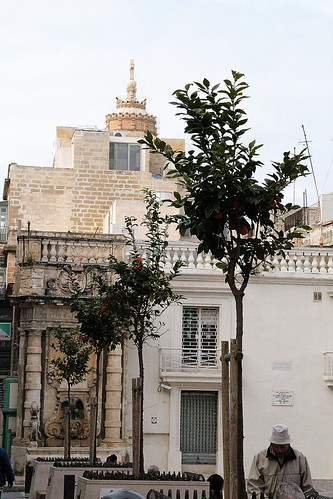 orange-trees-valetta