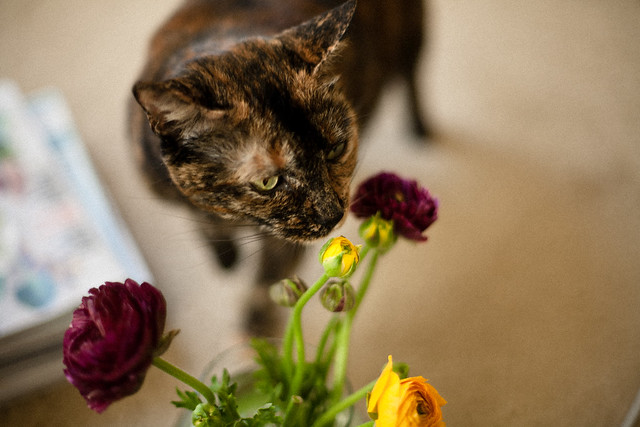 Stopping to smell the ranunculus