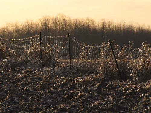 Icy Field Fence