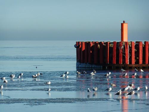 A winter walk in Køge Marina