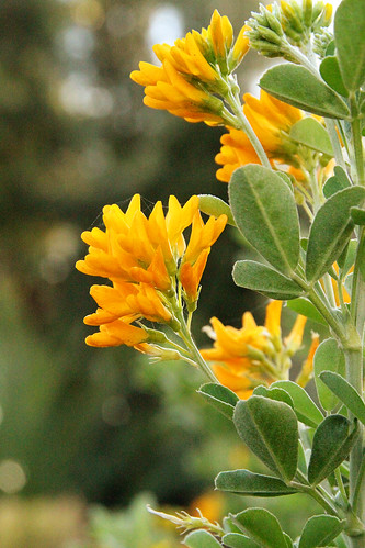 Yelloworange-flower-cobweb