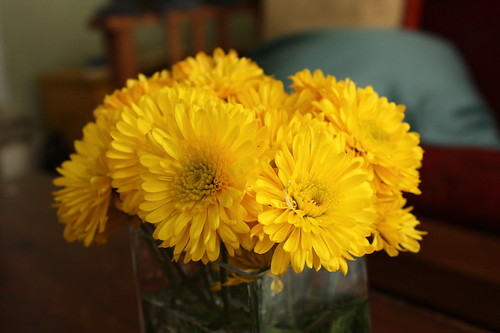 365.37 yellow flowers