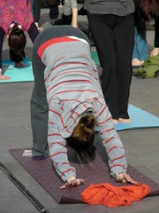 Yoga Flashmob in Cardiff