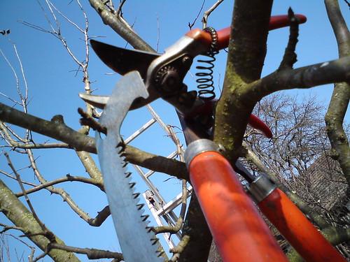 Obstbaumschnitt 2011