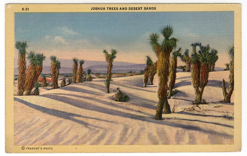 Joshua Trees f auto