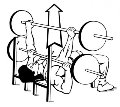 Bench Press: Ejercicio Clasico para Pectorales