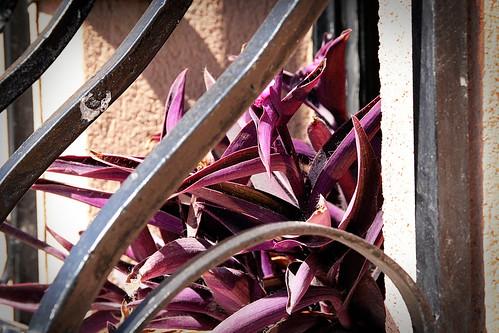 Cactus-windowsill-Mosta
