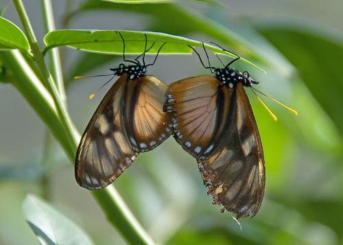 Butterfly park near Manizales