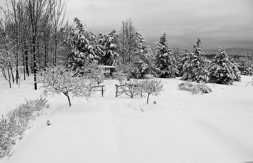 -garden-after-snow