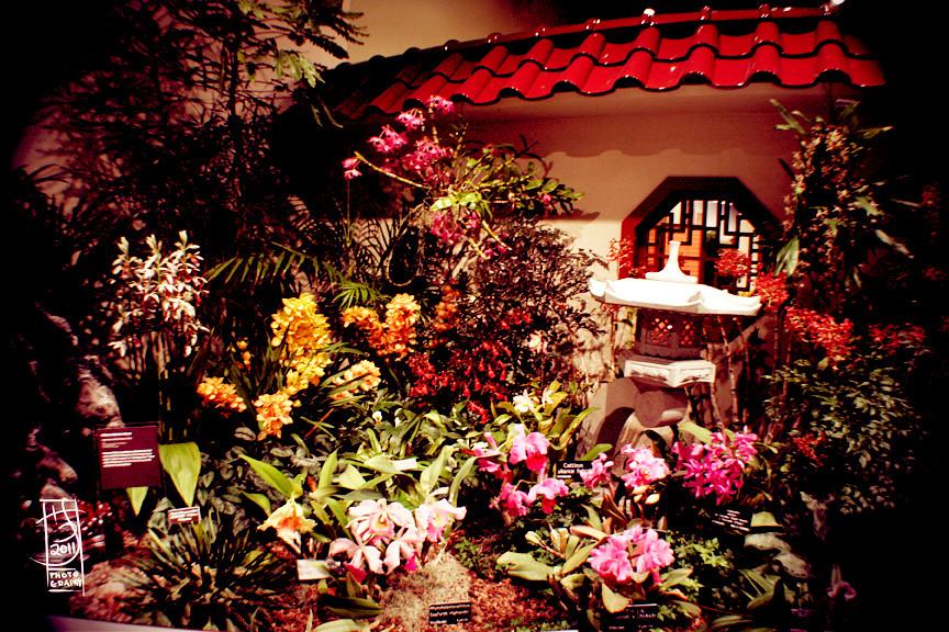 DC Orchids 02