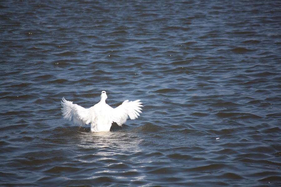20110205_01_Beautiful Duckling_06