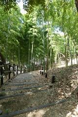 鴨居原市民の森(竹の径、Kamoihara Community Woods)