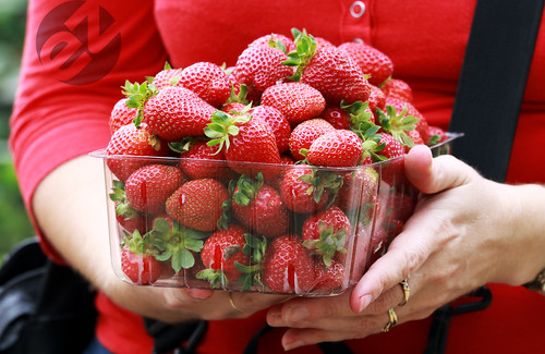 1.5 Kilograms of Hand-Picked Strawberries