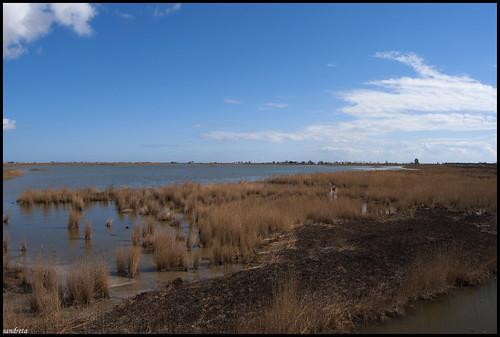 El paisaje del Delta