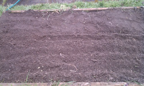 A picture of possibility....peas, arugula, and radishes - April 10, 2011